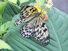 Sertoma Butterfly House in Sioux Falls, SD