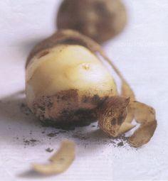 structuur van een aardappel