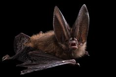 16 Incredible Pictures Show the Beauty of Bats