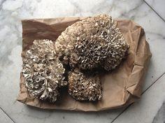 maitake-mushroom-4.jpg