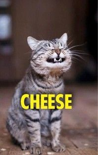 lol funny animals - OMG! this looks like my niece, Francis with her cheesy smile...