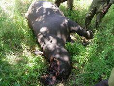 Zimbabwe warned over rhino poaching