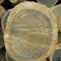 Gaiac Wood from India
