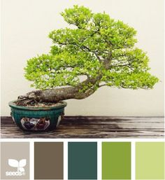 Bonsai colors.