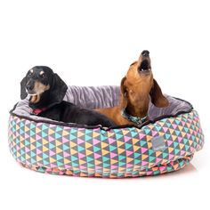 Shop stylish and contemporary FuzzYard pet products for your dog and cat. Dachshund Love, Pet Beds, Bean Bag Chair, Your Dog, Dog Cat, Pop, Cats, Gatos, Popular
