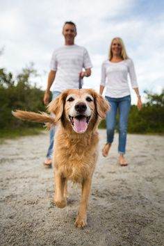 Leila the Golden Retriever by Nicole Begley Photography | Pretty Fluffy - Love how this photo was done!