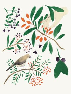 GREENHOUSE prints & illustrations by Lotte Dirks