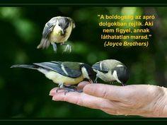 Joyce Brothers idézet a boldogságról. A kép forrása: Szabadon Ébredők