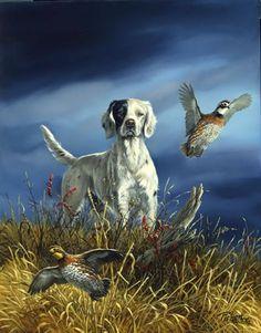 Wildlife Paintings, Wildlife Art, Animal Paintings, Animal Drawings, Hunting Art, Hunting Dogs, Hunting Drawings, Hunter Dog, Art Carte