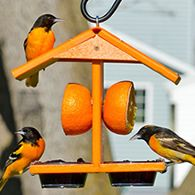 Bird Feeder Plans, Bird House Feeder, Diy Bird Feeder, Oriole Bird Feeders, Wooden Bird Feeders, Homemade Bird Houses, Homemade Bird Feeders, Butterfly Feeder, Bird Feeding Station