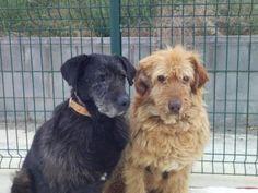 Año de nacimiento: Maig 2007  Sexo: Macho  Raza: Mestizo  Tamaño: Grande    Rubi llegó con Álvaro... #adoptar #mascotas #adopcion #perros #gatos