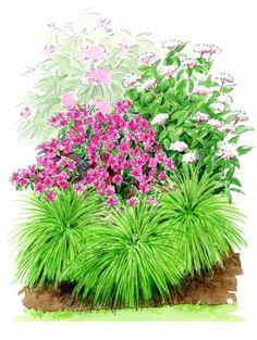 Scène rhododendrons & azalées - un jardin qui vous ressemble
