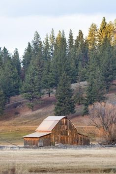 Barn In Sula, Montana