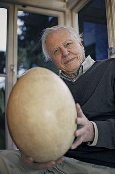 David Attenborough and his Elephant bird egg, a now extinct bird from Madagascar