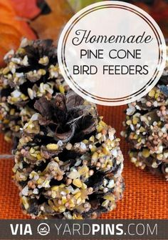 Fantastic! -  | Check out more fantastic pictures of cool bird feeders here at yardpins.com | #birdfeeders #birds #aviary #gardens #gardening #botany #horticulture #flowers #trees #plants
