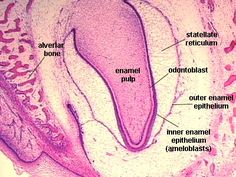 histology case studies