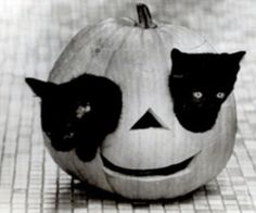 OMG CUTE!! Pin this in black cat or halloween board!??!!?!?!?!