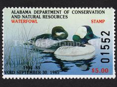 1984 Buffleheads Artist: William C. Morris