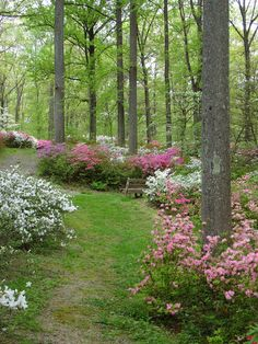 I would want to get married here if possible...azaleas are my favorite flower and i went here every year in pre-school and i always love driving by when its in full bloom....it also has water near by for some really good pictures