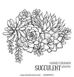 stock-vector-vector-illustration-of-hand-drawn-succulent-plants-black-and-white-graphic-for-print-coloring-435897871.jpg (450×470)