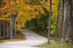 brown dirt: Gravel road beneath colorful autumnal trees Stock Photo
