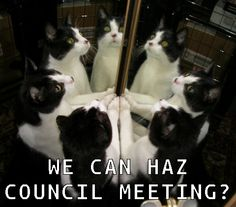 Meow Council is Now In Session