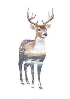 Faunascapes Deer Art Print by WhatWeDo por WhatWeDoDK en Etsy