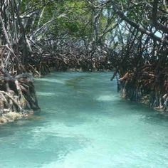 Bioluminescent bay, Puerto Rico. I think I got up close and personal with these trees while in a canoe.