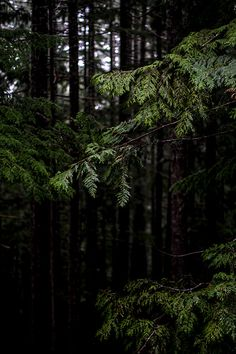 Deep Dark Woods | Flickr
