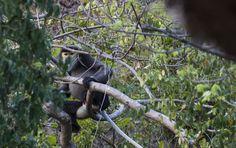 Glimpse the critically endangered douc langur on a trek to Bai Nho. #outoftheordinary