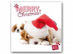 Hunderassen WeihnachtskartenMyrna Weihnachtskarte: Cavalier King Charles Spaniel Welpe