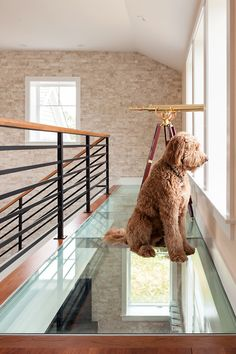 Attic | Glass Floor | Surveillance | King of the Hounds | Brewster Net Zero house, MA. A3 Architects, INC.. Dan Cutrona Photography.
