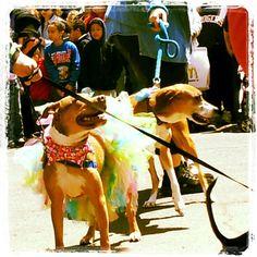 Happy pups Humane society