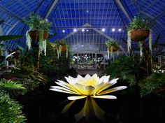 A sculpted glass water lily by artist Jason Gamrath is seen in Phipps' Victoria Room. Photo copyright Ed Massery.