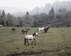Wild ponies | The North Realm