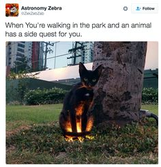 Adventures with cat: | 27 Cat Pictures That Are Never Not Funny