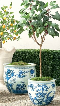 Featuring elegant patterning based on traditional design motifs passed down from antiquity, our Blue Ming Handpainted Ceramic Planters are the perfect addition to your home or garden. Hand-glazed and fashioned from wheel-thrown clay. Furniture Placement, Ceramic Planters, Hand Painted Ceramics, Traditional Design, Cleaning Wipes, Clay, Shapes, Elegant, Antiques