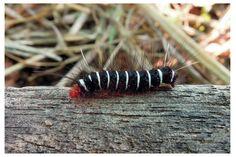 Caterpillar 4 by kiew1.deviantart.com on @DeviantArt