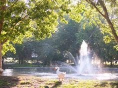 Riverside Park, Duck Pond