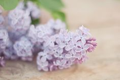 Lovely lilacs   Karin A #photography   http://karinafotografi.se/