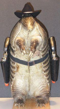 armadillo taxidermy