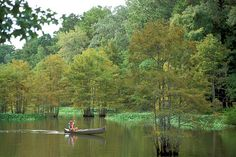 Martin Dies, Jr. State Park sits at the edge of the Big Thicket National Preserve. Explore the park's 3 paddling trails and enjoy incredible wildlife viewing opportunities.