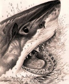 Great White Shark in great white shark pencil drawing collection - ClipartXtras Megalodon, Shark Pictures, Shark Photos, Animal Drawings, Cool Drawings, Pencil Drawings, Drawings Of Sharks, Shark Tattoos, Body Art Tattoos