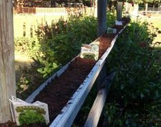 Houzz Call: Where Are the Craziest Places You Grow Edibles?