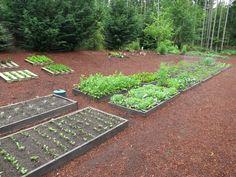 http://www.onehundreddollarsamonth.com/wp-content/uploads/2013/05/raised-garden-beds5.jpg