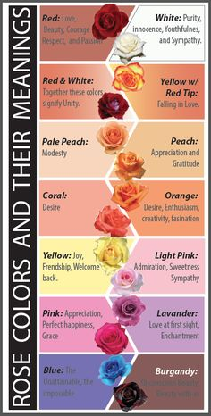 Rose Colors and their Meanings. You wouldn't want to give someone a rose with the wrong meaning.