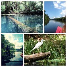 Wacissa river. Lamont Florida. Wacissa springs. Kayaking. Nature. Birds. Peaceful