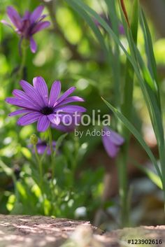 Purple is the flower - Buy this stock photo and explore similar images at Adobe Stock Stock Photos, Purple, Flowers, Plants, Image, Florals, Purple Stuff, Planters, Flower
