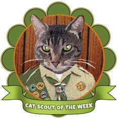 Congratulations to Gleek, the Cat Scout of the Week at catscouts.com.
