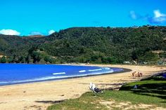 Matauri Bay camp ground in Northland New Zealand, is an Ideal Start or finish to you campervan holiday in New Zealand. New Zealand Holidays, Bay News, Beautiful Places To Visit, Countries Of The World, Holiday Destinations, Family Travel, The Incredibles, Vacation, Water